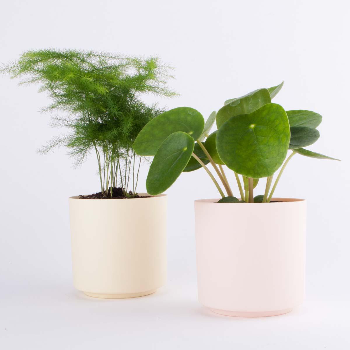 small pink pot